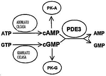 diabetes de la proteína quinasa c