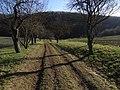PR Slavičí údolí - alej na severním okraji rezervace (k Lochkovu) (5).jpg