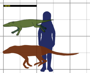 Pakicetus - Size of Pakicetus, compared to a human