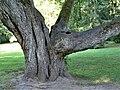 Palanga Botanical Park. 2018. Tree trunks(1).jpg