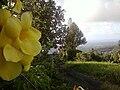 Palma Sola 2.jpg
