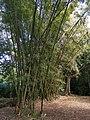 Pamplemousses Botanischer Garten 2019-09-27 6.jpg