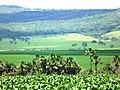 Paracatu - State of Minas Gerais, Brazil - panoramio (6).jpg