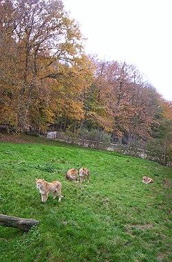 Parc zoologique de Lisieux.jpg