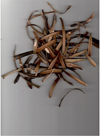 Incense offering in rabbinic literature - Pared bark of Styrax officinalis containing oleoresin Storax