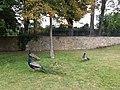 Paris - Jardin d'Acclimatation - Trois paons.jpg