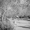 Park in Tel Aviv met moeders en kinderen en kinderwagens, Bestanddeelnr 255-1296.jpg