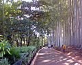Parque Ecologico Americana SP Brasil arvores.JPG