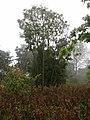 Past dripping vegetation - geograph.org.uk - 591843.jpg