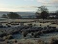 Pasture, Alston - geograph.org.uk - 297886.jpg
