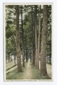 Path to Sleepy Hollow, Concord, Mass (NYPL b12647398-73828).tiff