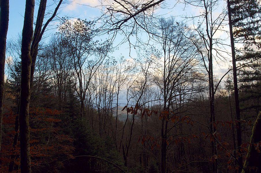 Morvan Forest