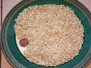 Pearl barley - Uncooked pearl barley with U.S. one cent coin for size comparison