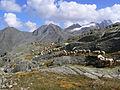 Pecore in Paradiso 5.JPG