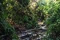 Penang National Park - panoramio (4).jpg