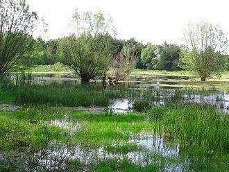 Pilica (river) - Pilica River near Sulejów, Poland