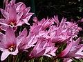 Pink flowers bloom.jpg