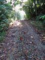 Pipeline Road @ Rio Frijoles - Flickr - treegrow.jpg