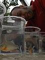 Piranha-SLH.jpg