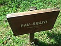 Placa descritiva - Pau Brasil.jpg