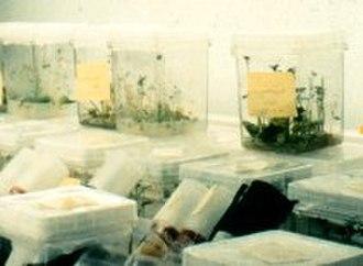 Plant tissue culture - In vitro tissue culture of potato explants