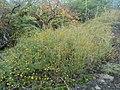 Plantas - panoramio (1).jpg