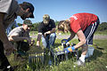 Planting Prairie in the Mississippi National River and Recreation Area.jpg