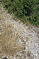 Plants in Gorges de Ardeche2.JPG