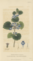 Plate 14 Glechoma Hederacea - Conversations on Botany-1st edition.tiff