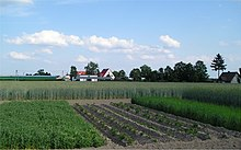 Effects Of Crop Rotation And Monoculture At The Swojec Experimental Farm,  Wroclaw University Of Environmental And Life Sciences. In The Front Field,  ...