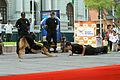 Policía Canina Hacen una Exhibición (6911502577).jpg