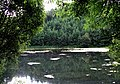 Pond, Duns Castle Grounds - geograph.org.uk - 68566.jpg