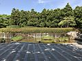 Pond in Higashi Park, Fukuoka 4.jpg