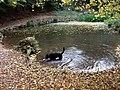 Pool at Paradise Bottom - geograph.org.uk - 1592268.jpg