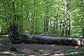 Prästaskogen may 2018-3.jpg