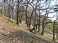 Prague Kunraticky Forest Loess2.jpg