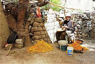 Apricot - Preparing apricots in the grounds of Alchi Monastery, Ladakh, India