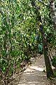 Pretoria Botanical Gardens-011.jpg