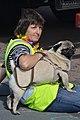 Proud Pug, Brighton Pride 2013 (9429158399).jpg