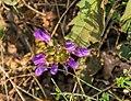 Prunella grandiflora in PNR Pyrenees ariegeoises 03.jpg