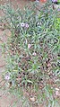 Purple plant 01.jpg
