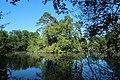Réserve naturelle régionale des étangs de Bonnelles le 26 mai 2017 - 40.jpg