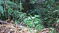 Rainforestation, Kuranda - panoramio (4).jpg