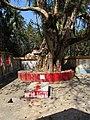 Raksha Kali Shrine - Raksha Kalitala - Baduria - North 24 Parganas 2012-02-24 2355.JPG