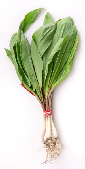 Allium tricoccum - Image: Ramp Bunch
