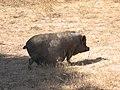 Rancho Grande - panoramio - Emanuela Meme Giudic… (5).jpg