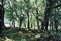 Rassal Ashwood NNR - geograph.org.uk - 505208.jpg