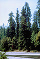 Redwood National Park REDW9365.jpg