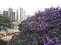 Região da Vila Arens Março 2012. - panoramio (1).jpg
