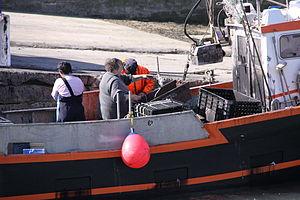 Retour de la pêche à la seiche du fileyeur Jason IV (38).JPG